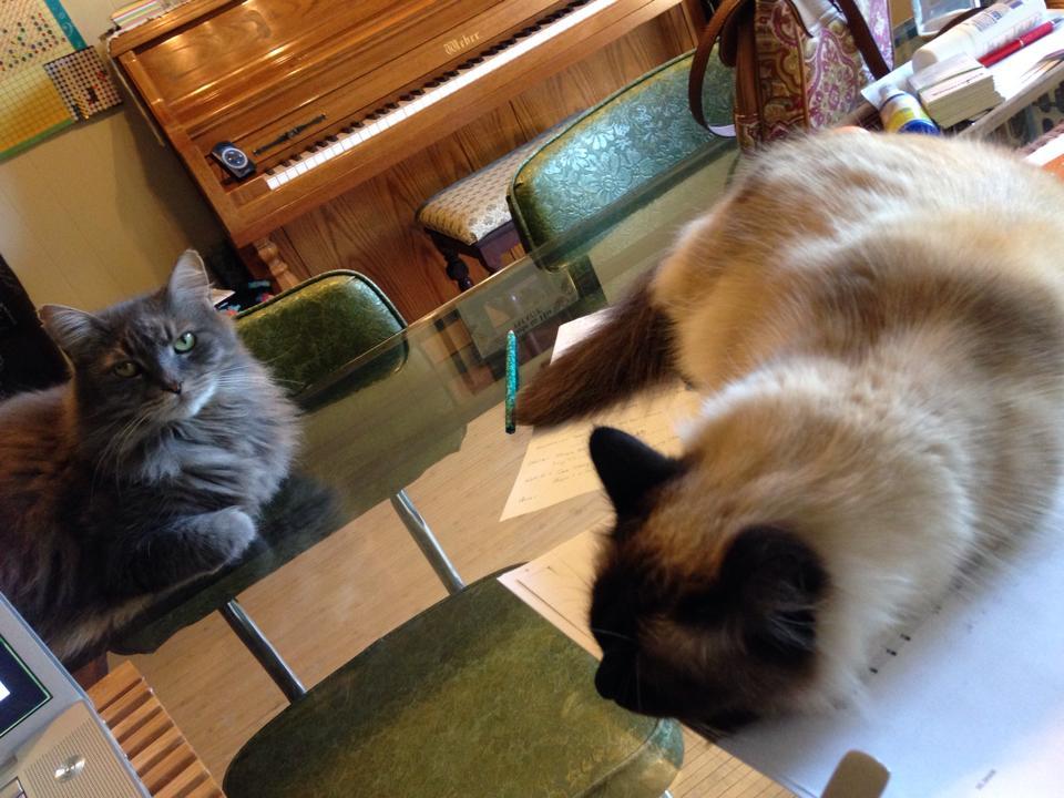 mycats
